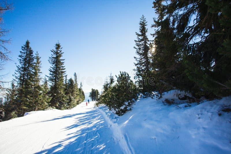 滑雪倾斜lanscape 免版税库存图片