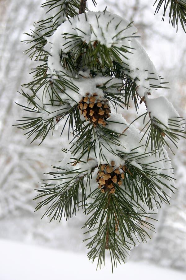 雪冬天 免版税库存照片
