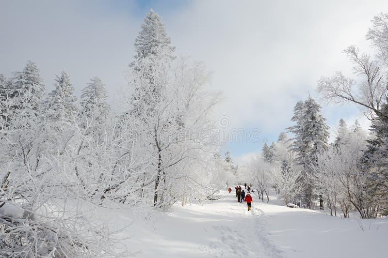 雪原的访客 免版税库存照片