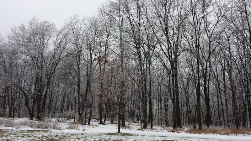 雪和冰川覆盖的森林2 库存图片
