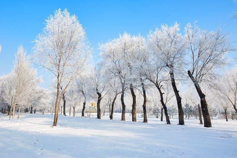雪和树与霜 库存图片