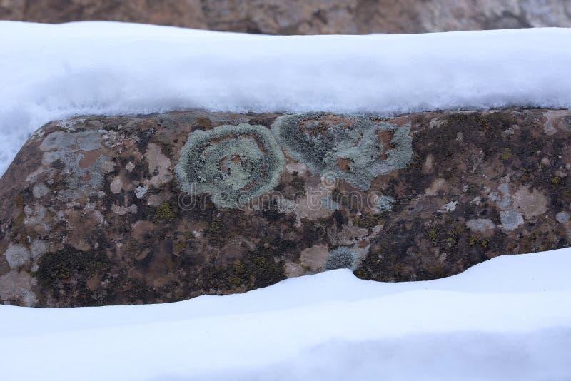 雪和砂岩层数与在拱门国家公园很少看见的地衣犹他 库存照片