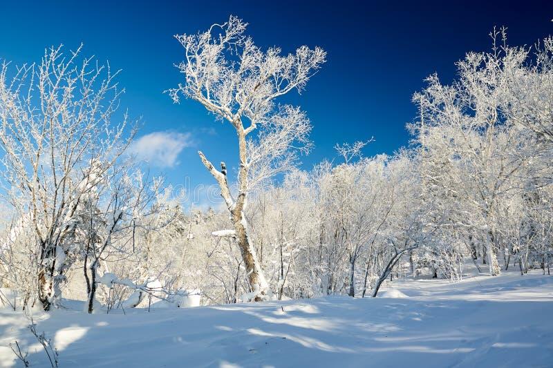 雪和软的霜在山冠上 库存图片