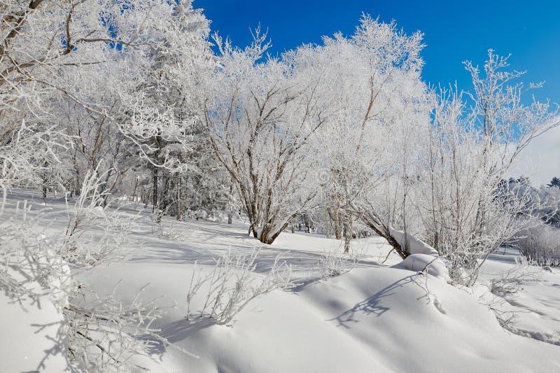 雪和软的霜 库存图片
