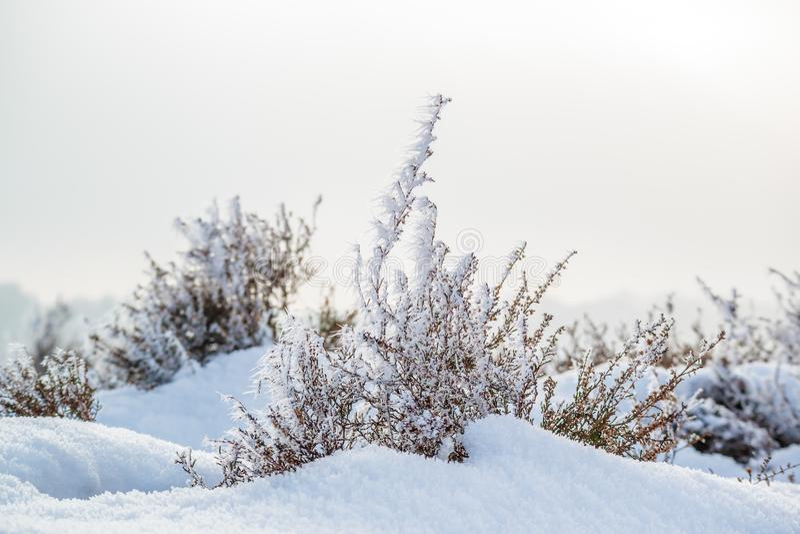 雪和霜盖了在荷兰Posbank的荒地 免版税库存图片