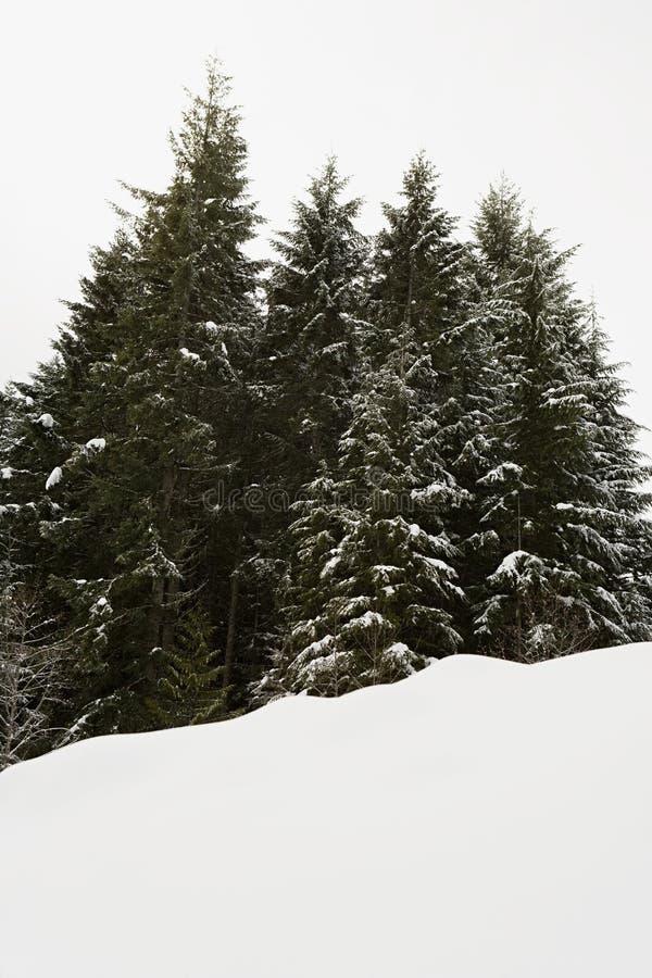 Download 雪和结构树 库存图片. 图片 包括有 倾斜, 冷杉, 沉寂, 多雪, 手段, 纯度, 收集, 绿色, 节假日 - 62533815