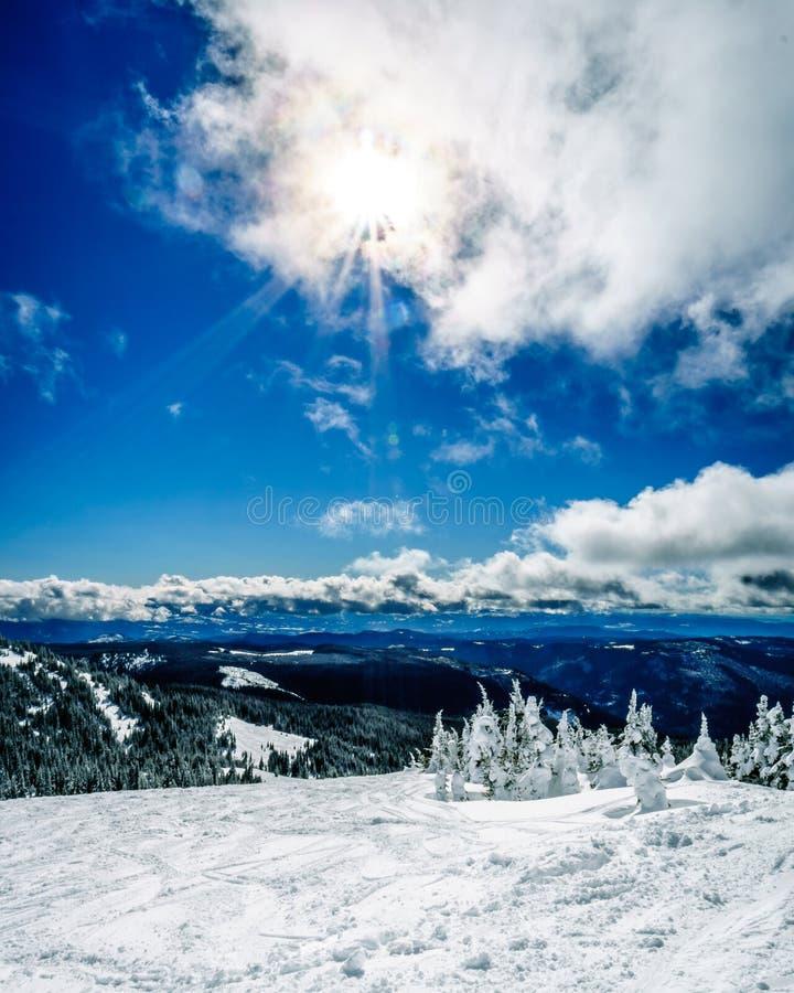 滑雪在积雪的树中在蓝天和明亮的太阳下 免版税库存照片