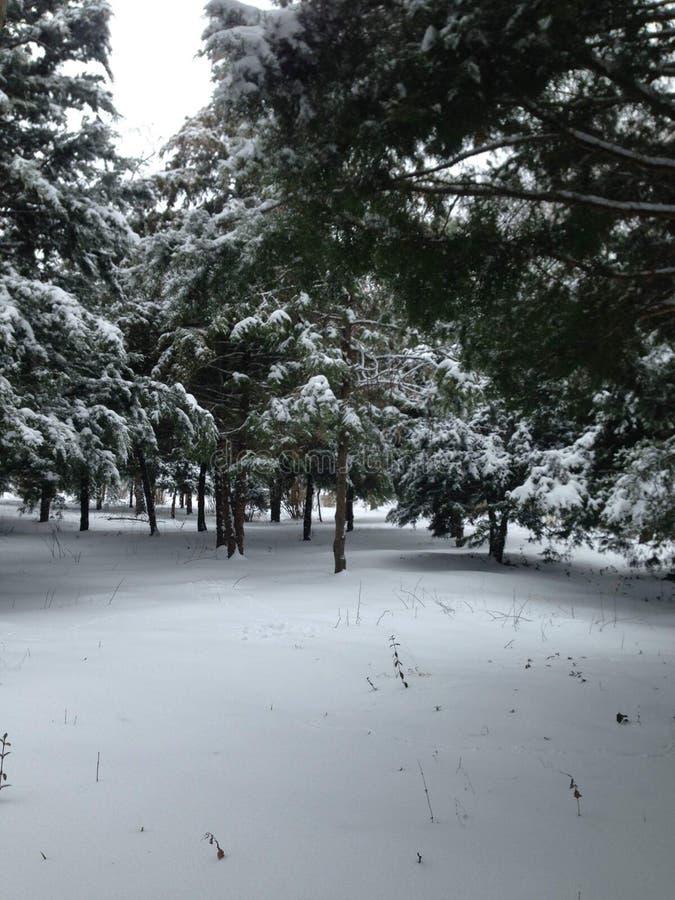 雪在罗马尼亚 免版税库存照片