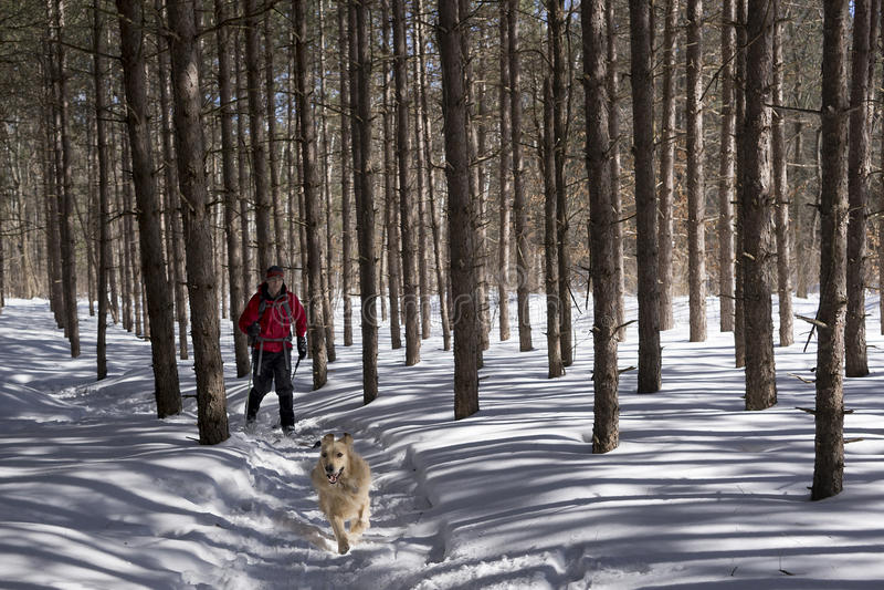 滑雪在诺森伯兰郡,安大略 库存图片