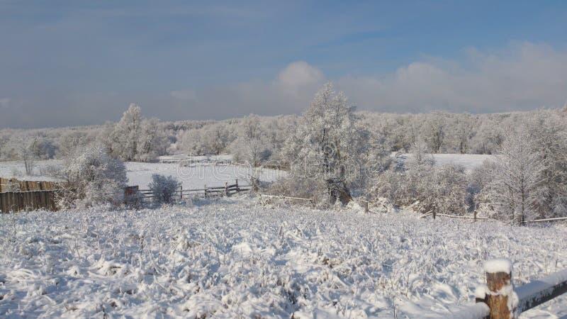 雪在4月 免版税库存图片