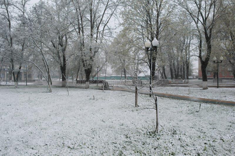 雪在4月 库存图片
