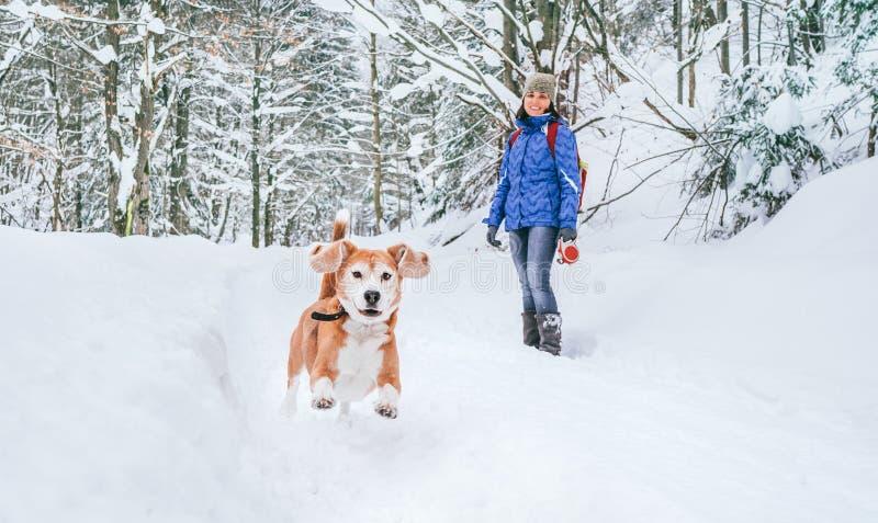 雪地中奔跑的活动犬 它的女主人看着,微笑 带宠物概念的冬季散步 免版税库存图片