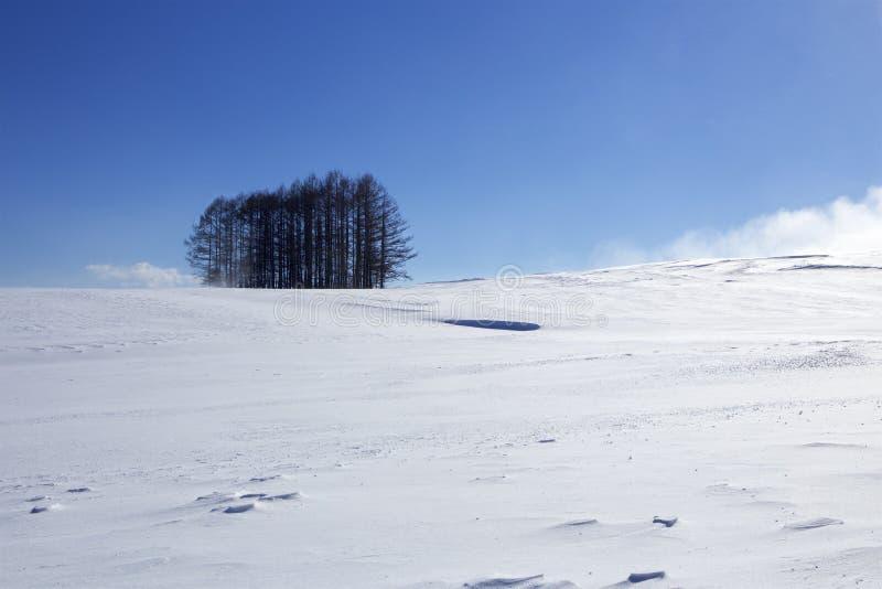 雪场面在日本 免版税图库摄影