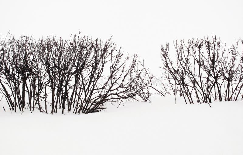 雪场面树篱剪影 免版税库存图片