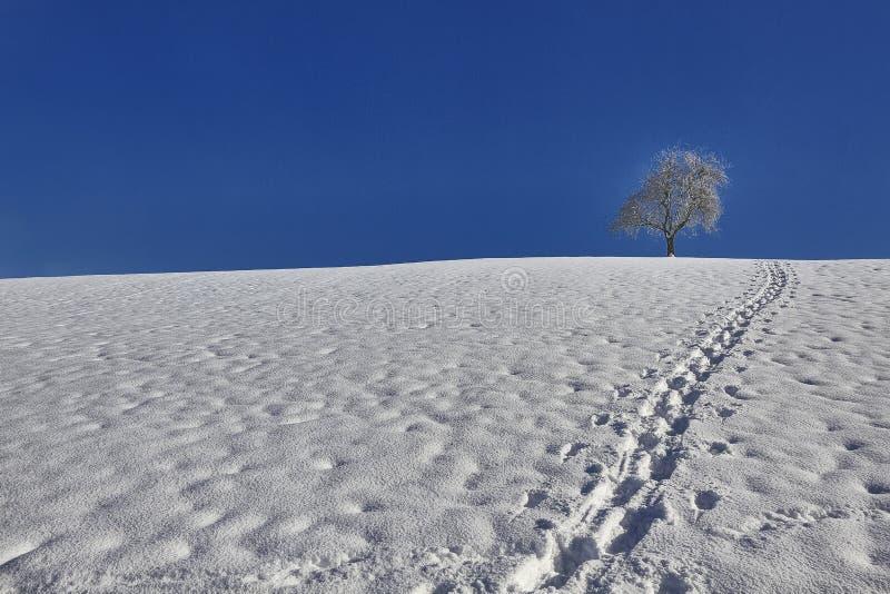 雪域孤树冬天碧蓝,脚印 免版税库存照片