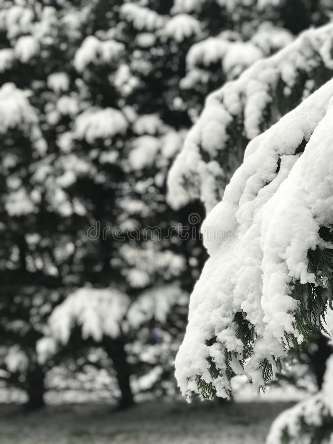 雪天 库存图片