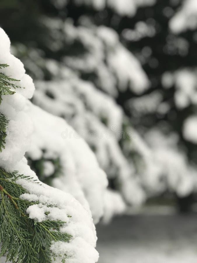 雪天 免版税库存照片