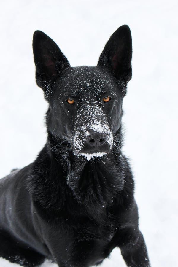 雪小狗 库存图片