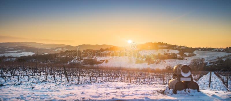 雪报道的葡萄园行在冬天在日落 Chianti,西埃 免版税库存图片
