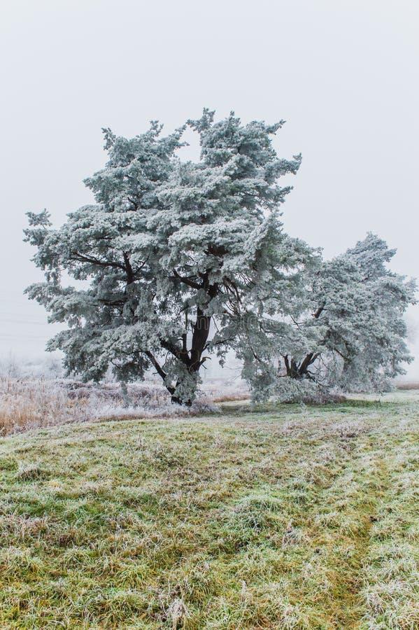 雪时间 库存照片