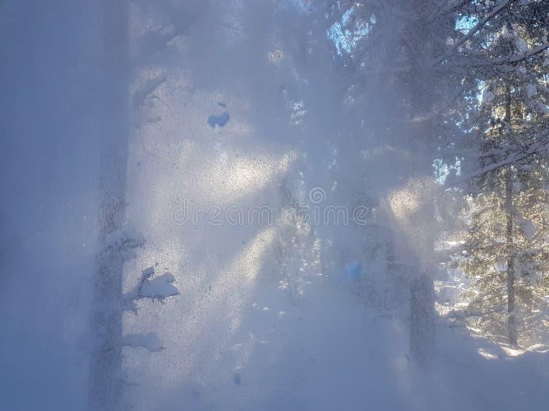 雪是落树在森林里 库存图片