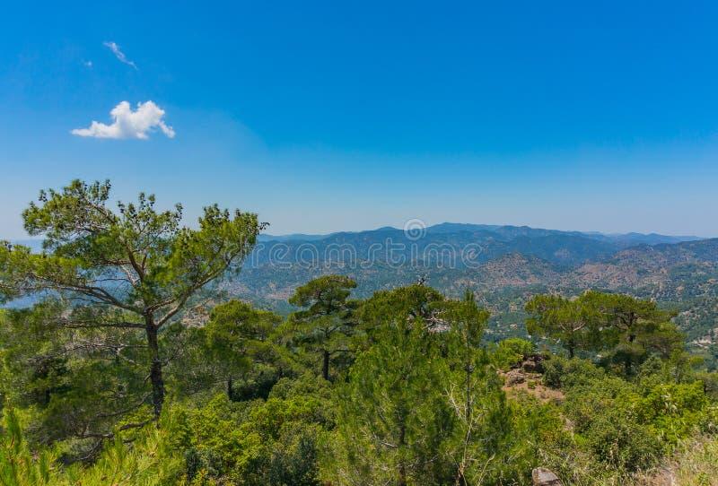雪松和Troodos山的美丽的景色,塞浦路斯 r 免版税库存图片