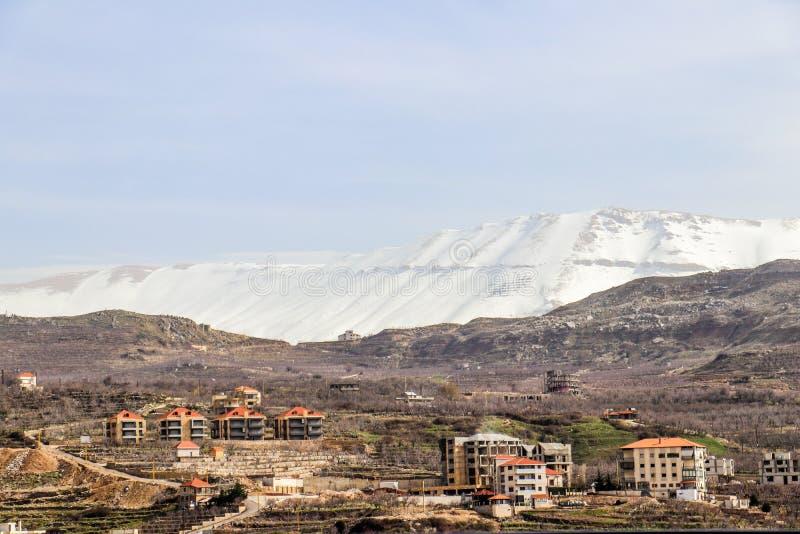 雪松在黎巴嫩在冬天2018年 图库摄影