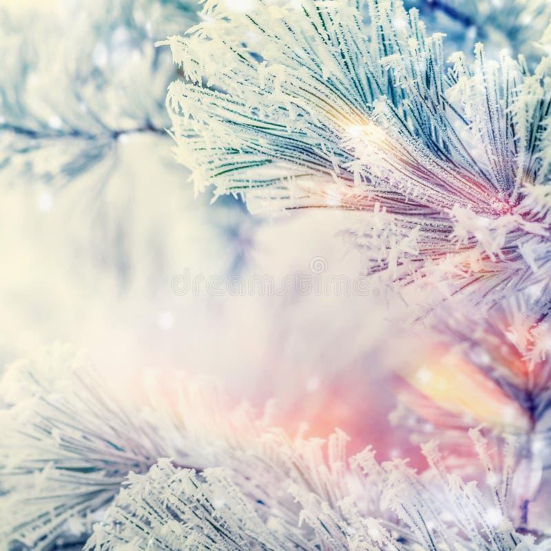 雪松或冷杉冻结的分支在冬日雪背景 免版税库存照片