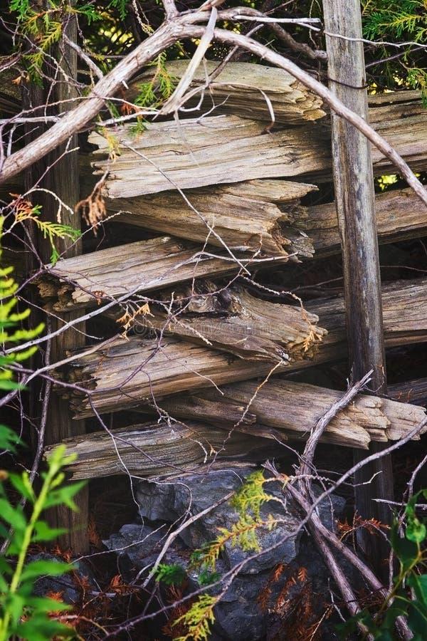 雪松栅栏 库存图片