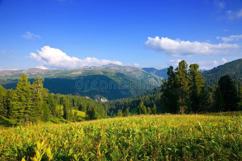 雪松森林横向山 免版税库存照片