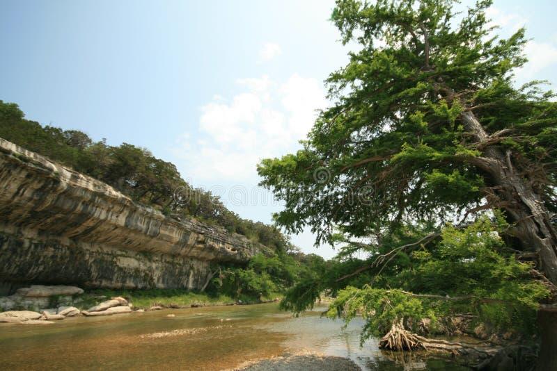 雪松guadalupe河结构树 免版税库存照片