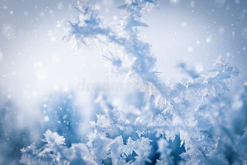 雪水晶的异常的形式在一棵树的分支的在一寒冷 免版税库存图片