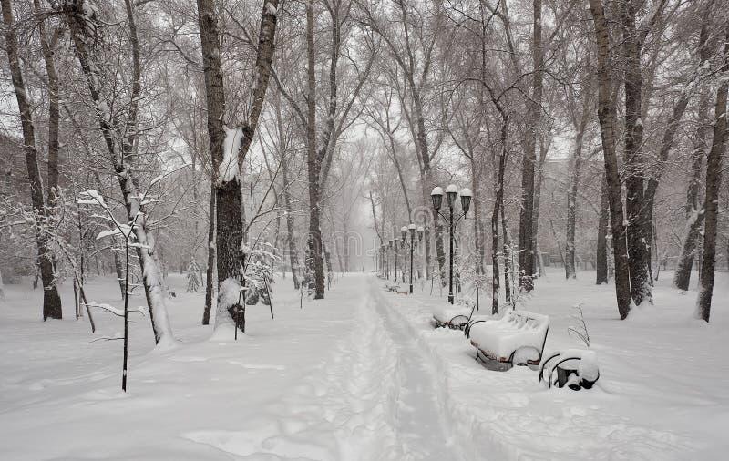 雪的公园 lley在公园 库存图片
