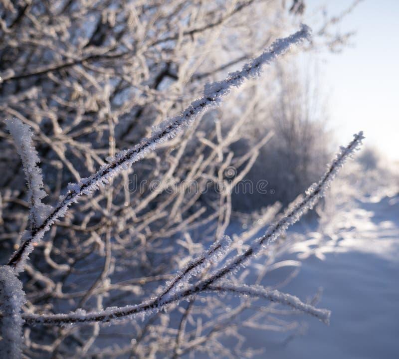 雪的冬天森林 雪山  弗罗斯特和雪花 地点地方喀尔巴阡山脉的乌克兰,欧洲 免版税图库摄影