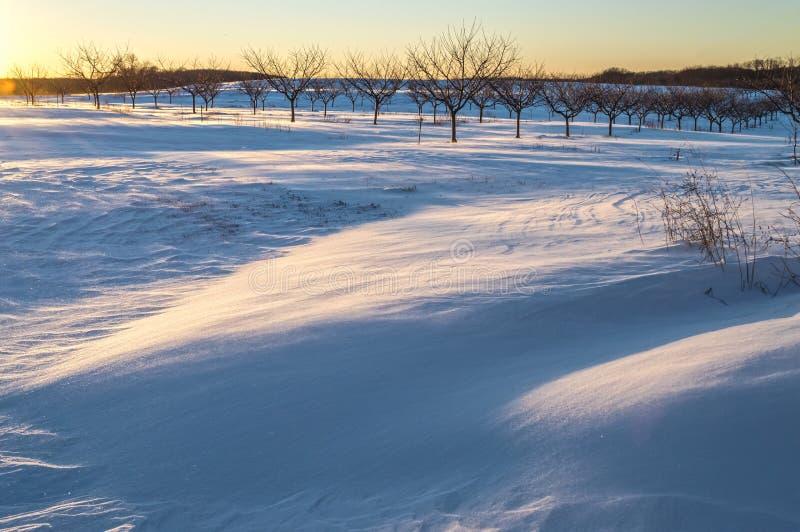 雪的果树园 库存图片