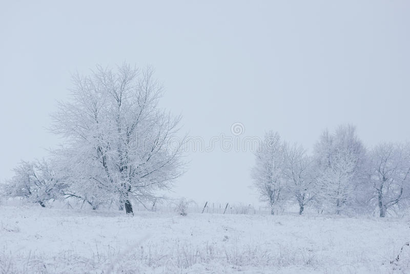 雪的森林 库存图片