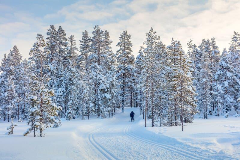 滑雪的足迹在美丽的冬天森林里 免版税图库摄影