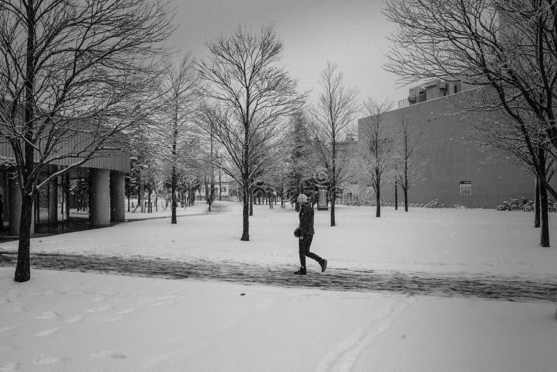 雪秋天的夫人 免版税库存照片