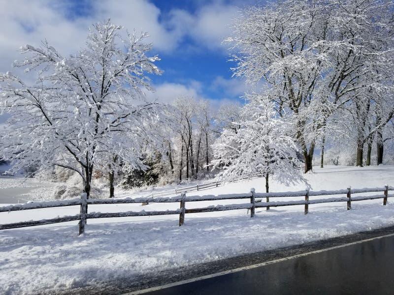 雪篱芭 库存图片