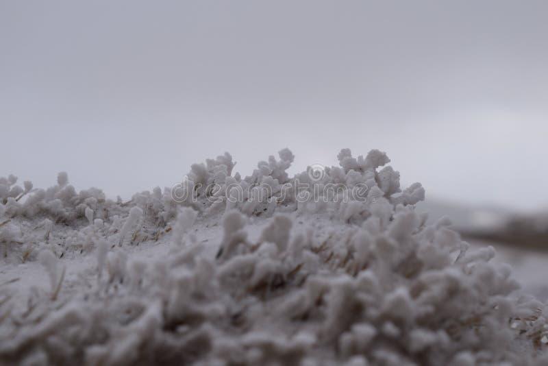 雪细节冬天 免版税库存照片