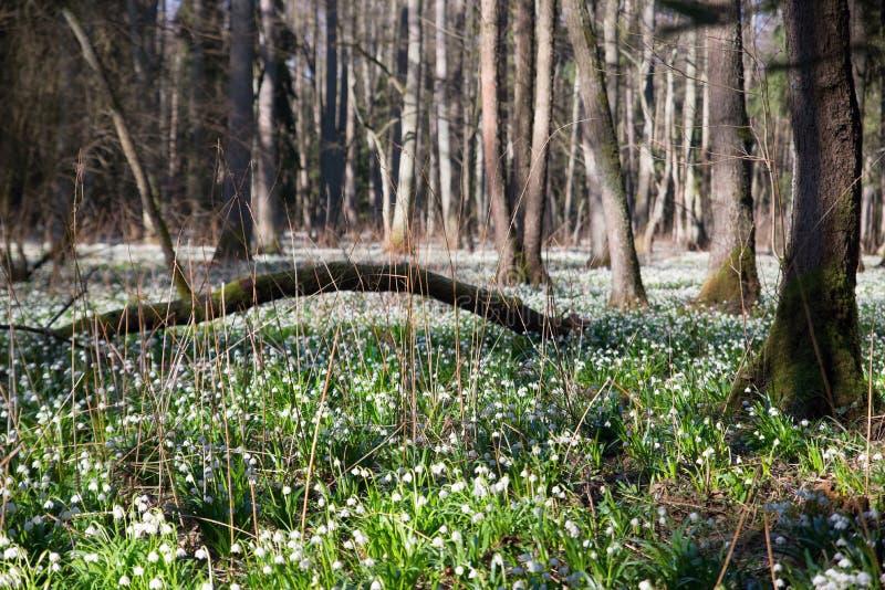 雪花在森林里 免版税库存图片