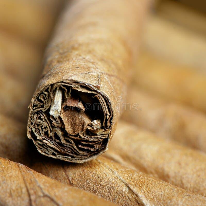 雪茄关闭  免版税库存照片