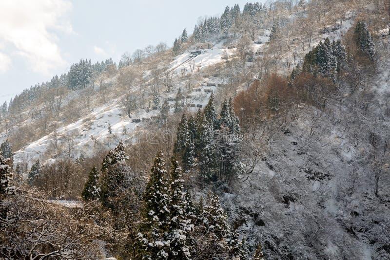 雪落入森林和山在日本 库存照片