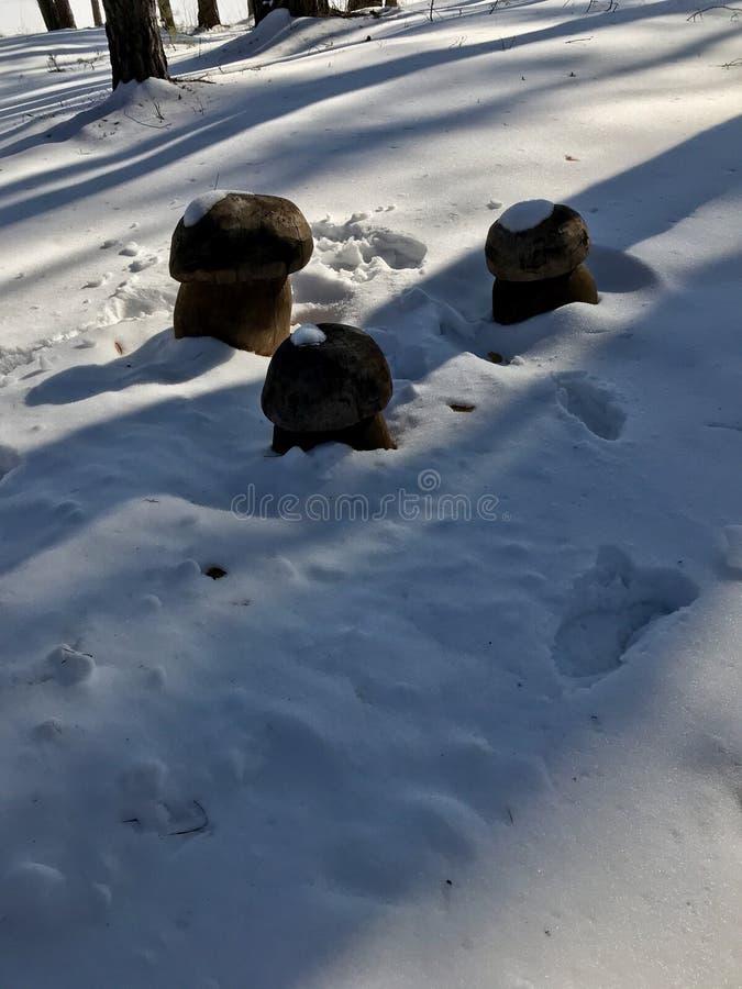 雪蘑菇 免版税库存照片