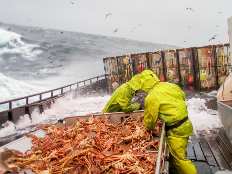 雪螃蟹(Chionoecetes bairdi)渔在阿拉斯加 免版税库存图片