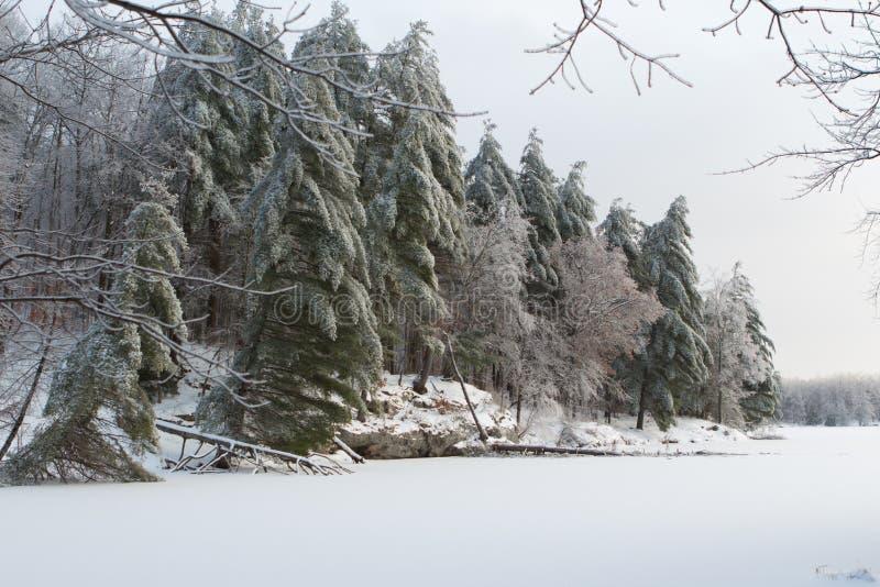 雪被装载的冬天树 库存图片