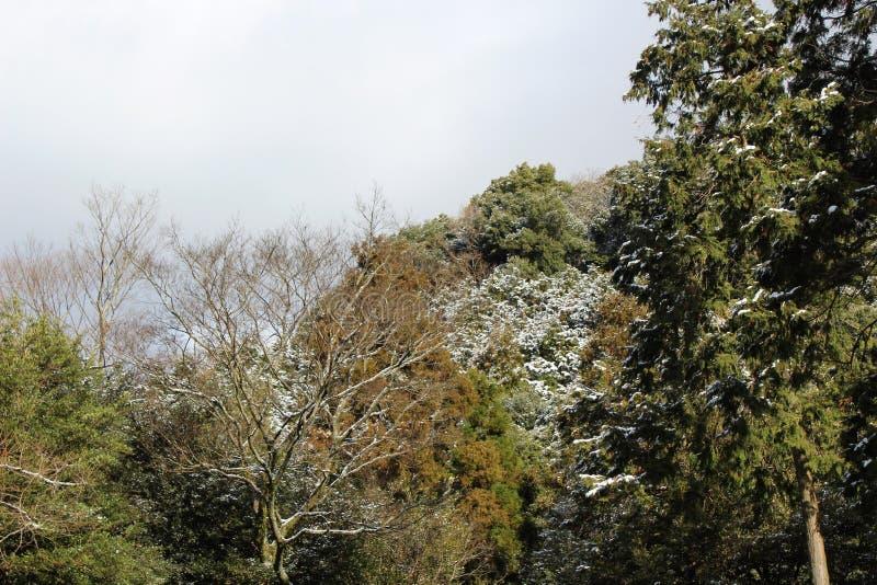 雪踪影在树的在温暖的气候 免版税库存图片