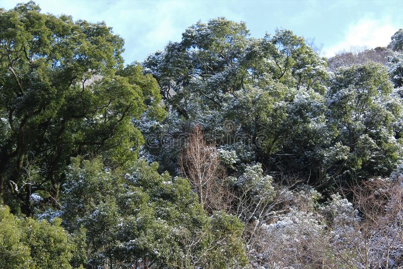 雪踪影在树的在温暖的气候 免版税库存照片
