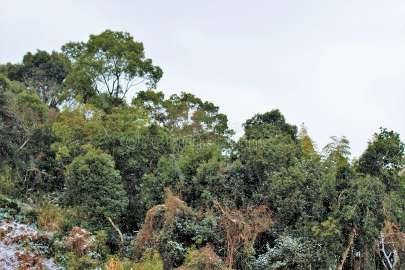 雪踪影在树的在温暖的气候 免版税图库摄影