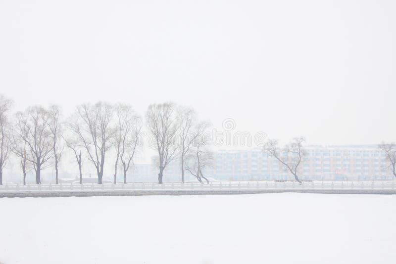 雪风景 免版税库存图片